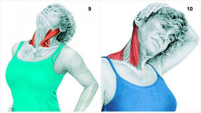 Pareiza muskuļu stiepšana